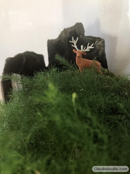 fabriquer un terrarium