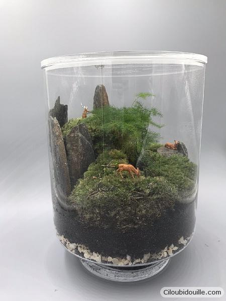fabriquer un terrarium c 39 est facile ciloubidouille. Black Bedroom Furniture Sets. Home Design Ideas