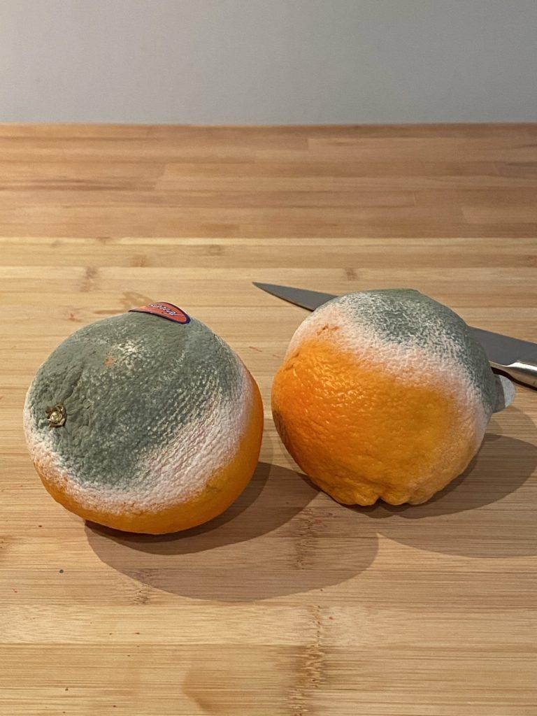 oranges pourries recyclées