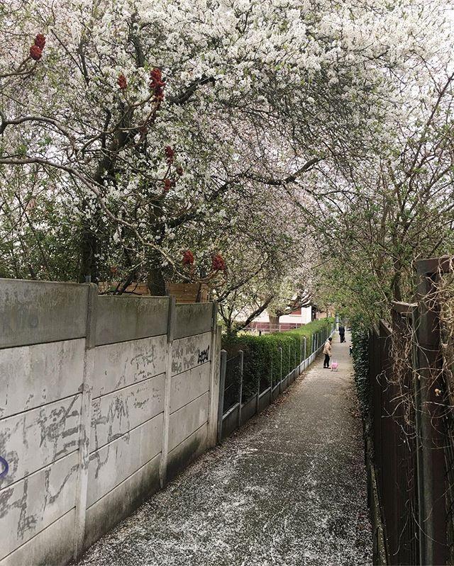 Du béton et des fleurs.