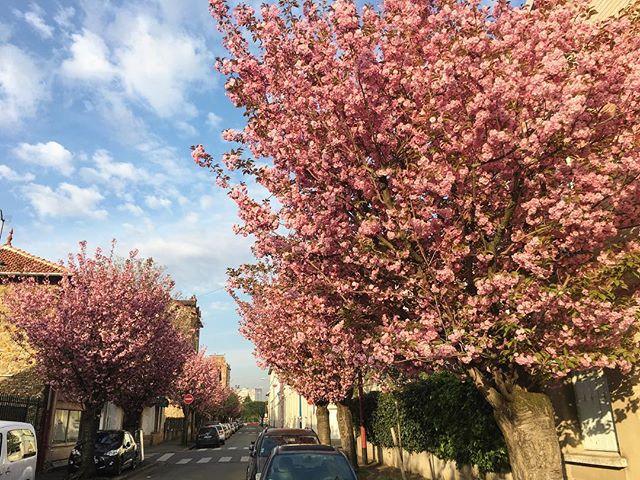Pas besoin d'aller au Japon, c'est Sakura dans nos villes en ce moment #toutescesfleurs