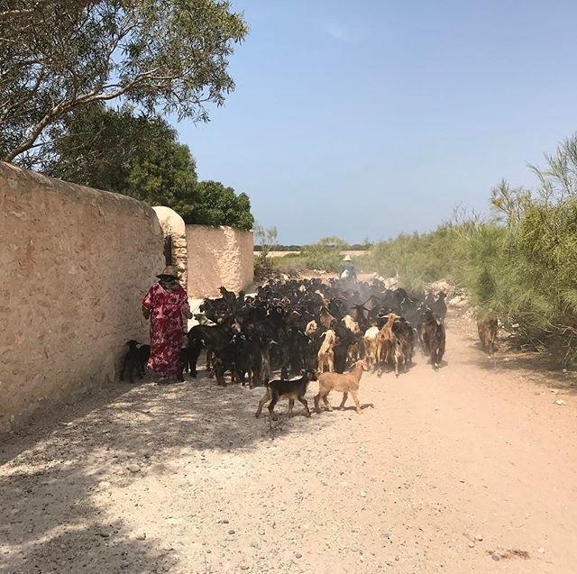 Les bouchons du footing #sidikaouki #essaouira #ciloubidouilleauMaroc