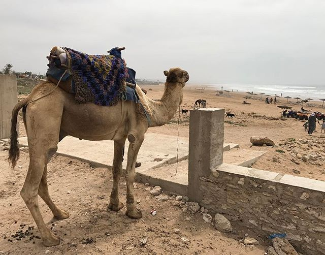 Bien arrivés à Essaouira #ciloubidouilleauMaroc