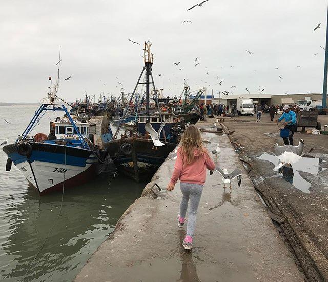 Courir derrière les mouettes, l'activité préférée de l'enfance non ? #essaouira #ciloubidouilleauMaroc