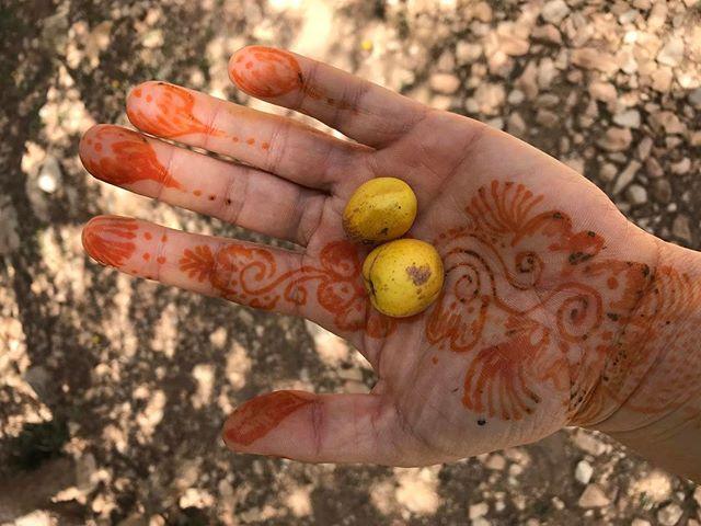 Le fruit de l'arganier et mon tatouage au henné #essaouira #ciloubidouilleauMaroc