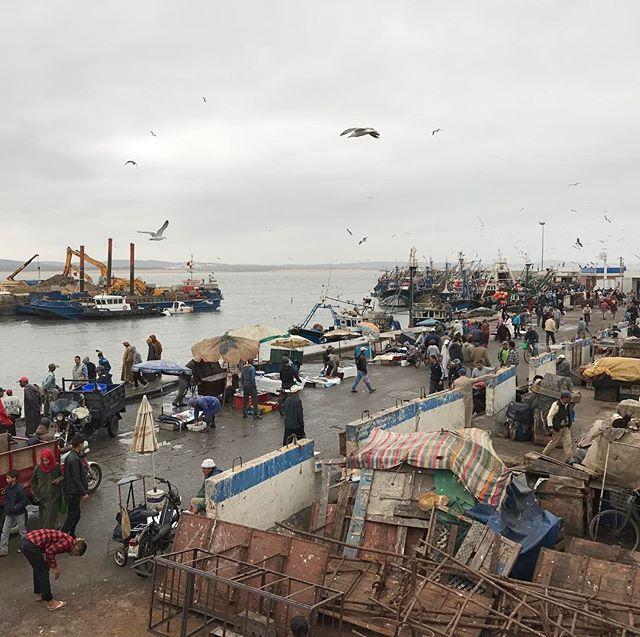 Le port d'Essaouira, rempli de pêcheurs venus vendre leurs poussons #essaouira #ciloubidouilleauMaroc
