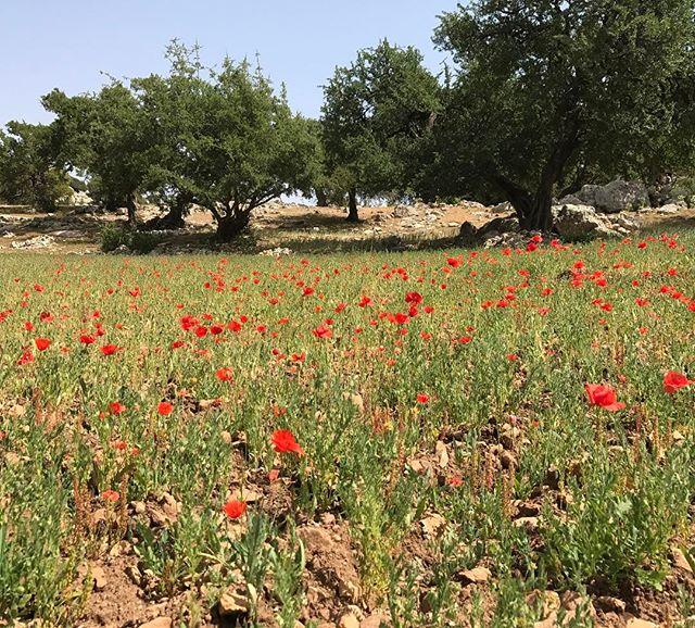 Ca n'a pas l'air mais là on est haut. Pourtant c'est cultivé ! #sidieljazouli #essaouira #ciloubidouilleauMaroc