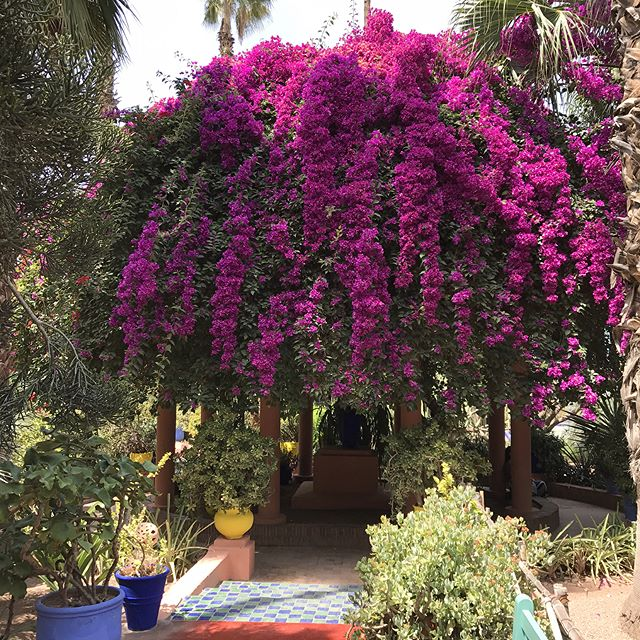 Le magnifique jardin de Majorelle #jardindemajorelle #marrakech #ciloubidouilleauMaroc