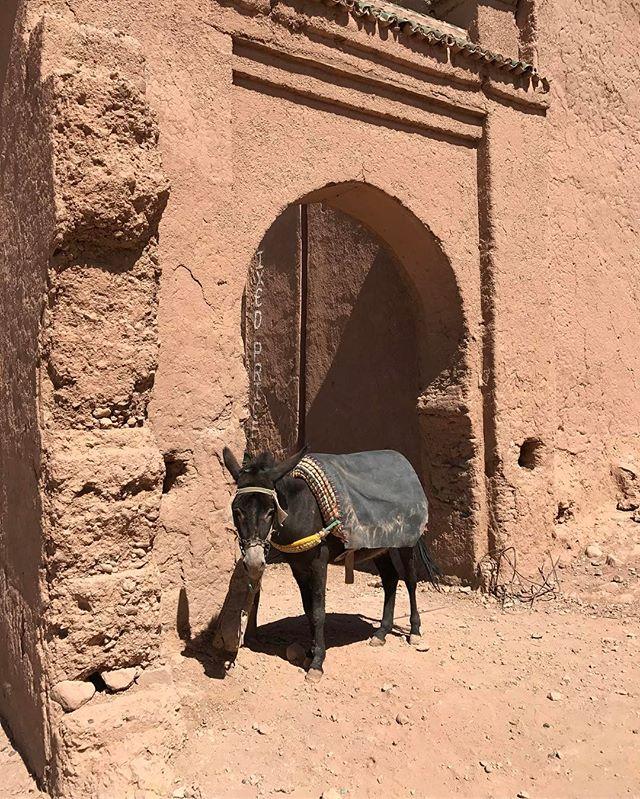 Aux portes du désert, à 60km au sud de Zagora, pas loin de la frontière de l'Algérie #maroc #zagora #désertmarocain #ciloubidouilleauMaroc