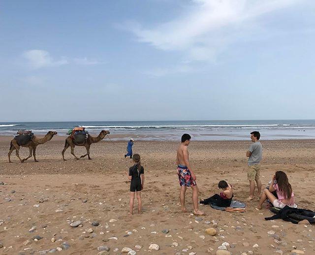 Dernier passage à la mer. Cette aprem on file à Marrackech #ciloubidouilleauMaroc #essaouira #sidikaouki