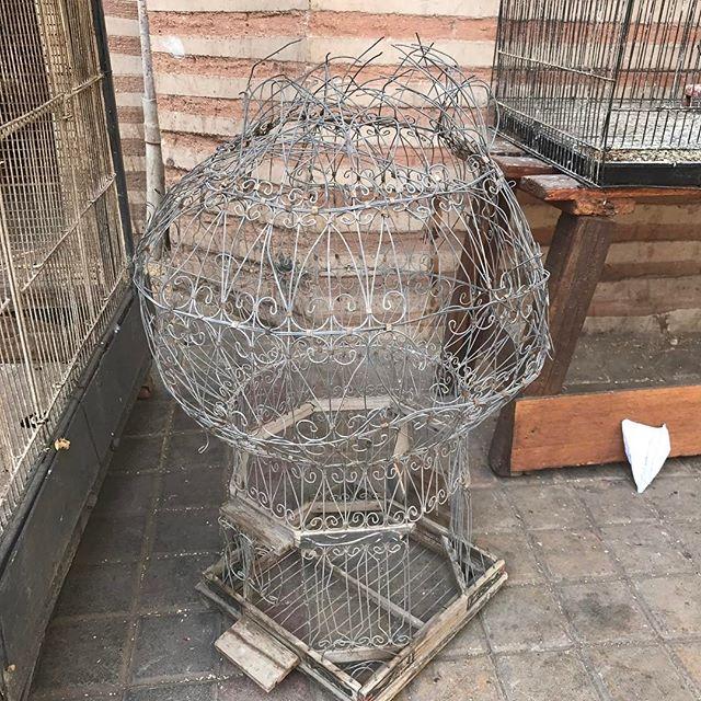 Ca m'a donné envie de terminer la cage ! #marrakech #ciloubidouilleauMaroc