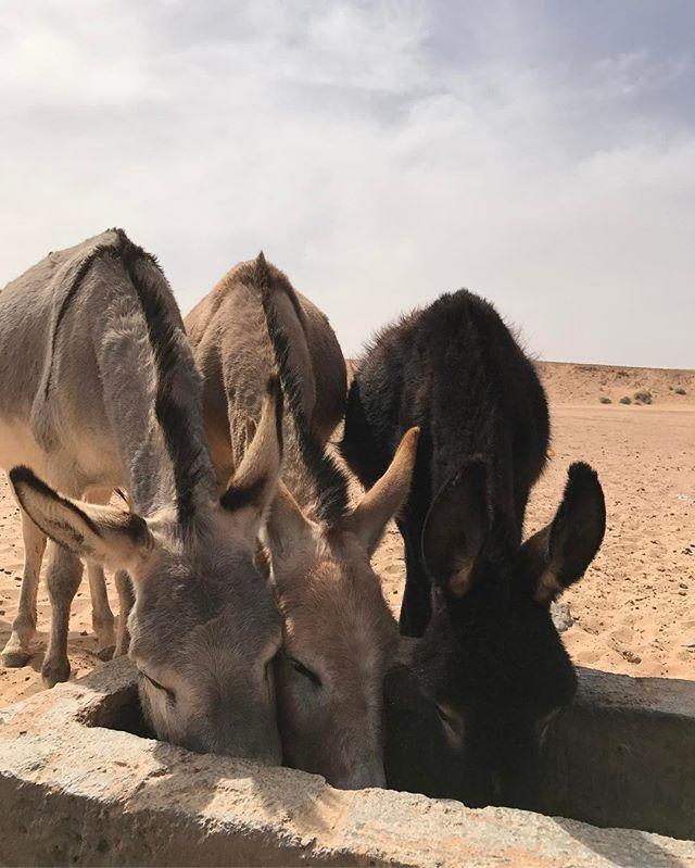 On s'est arrêtés à un puit au milieu du désert et on a croisé un berger venu faire boire ses bêtes #désertmarocain #chegaga #maroc #ciloubidouilleauMaroc