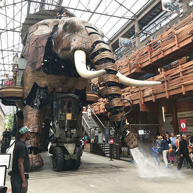 Toujours aussi magique cet éléphant des Machines de Nantes #nantes #machinesdelîle