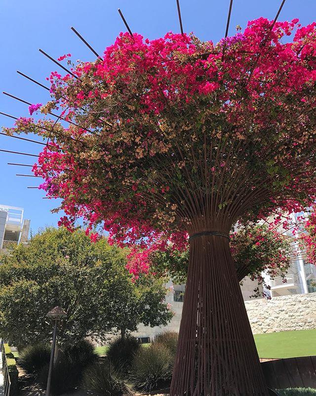 J'adore ces structures métalliques en forme d'arbre #gettycenter #losangeles #ciloubidouilleinUSA