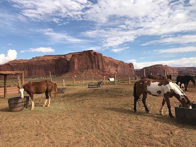 Tu peux faire des tours de chevaux dans Monument Valley mais perso, j'ai de plus en plus de mal avec les animaux à touristes. Pis monter sur un canasson (ou un éléphant, un âne, un dromadaire...), ce n'est clairement pas une source de joie pour moi ! #monumentvalley #ciloubidouilleinUSA