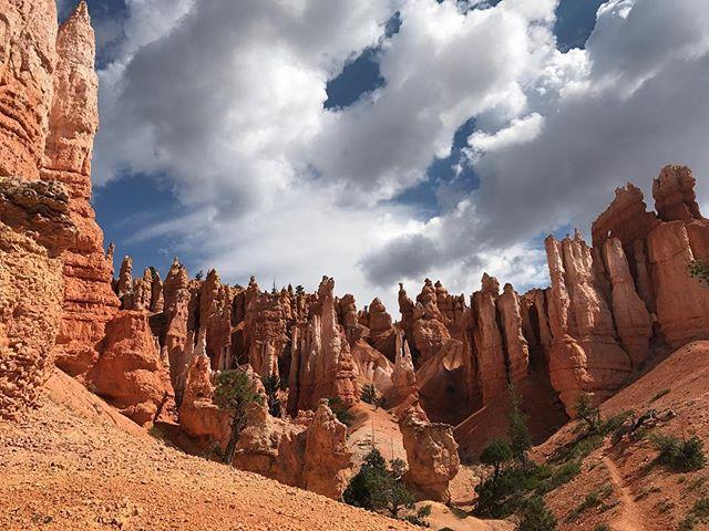 On se promène dans les Hoodooes de Bryce Canyon, mais à leurs pieds cette fois-ci #brycecanyon #brycecanyonnationalpark