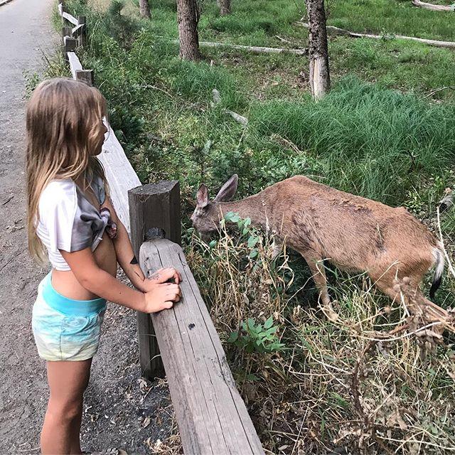 La petite biche, ce sera toi, si tu veux. Le loup, on s'en fiche, contre lui, nous serons deux... #yosemitepark #yosemite #ciloubidouilleinUSA #chansondouce