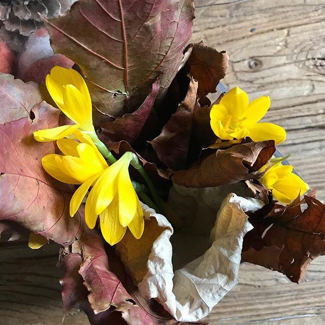 Le bouquet ramené par ma fille. Je me demande si un parterre de la ville n'a pas quelques fleurs en moins ^^