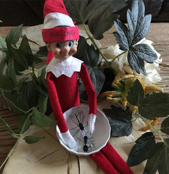 Le grand retour de notre elfe de maison ^^ ! J'espère qu'il reviendra souvent se figer dans des situations improbables ! Visiblement, il a dû vouloir regarder Koh-lanta aussi ce soir... Pour ceux qui ne connaissent pas cette tradition de Noël, je vous invite à lire cet article de mon blog (http://www.ciloubidouille.com/2015/01/15/elf-on-the-shelf/). #elfontheshelf #cilouelf #elfontheshelf2017