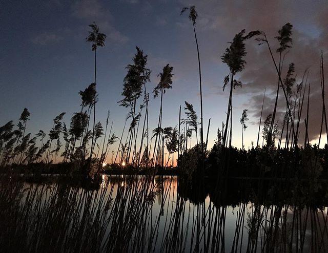 Footing du soir, avec un joli ciel orangé, des ombres chinoises et de la gadoue aux pieds...