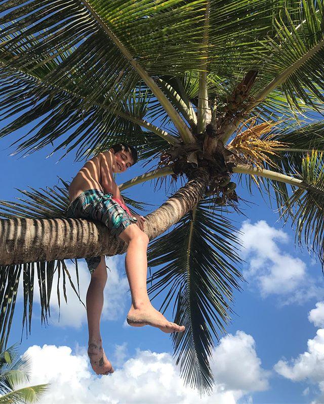Au sommet de son palmier #cilouenmartinique #martinique #cocotier #plagedudiamant