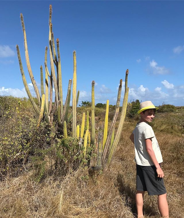 Promenade dans la savane des Pétrifications, vers Saint Anne. Il s'agit d'une zone désertique assez remarquable (surtout quand on compare au reste de la Martinique et à sa végétation luxuriante) ! #martinique #cilouenmartinique #petrification