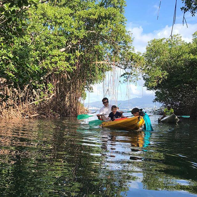 Matinée à pagayer dans la mangrove #mangrove #cilouenmartinique #martinique