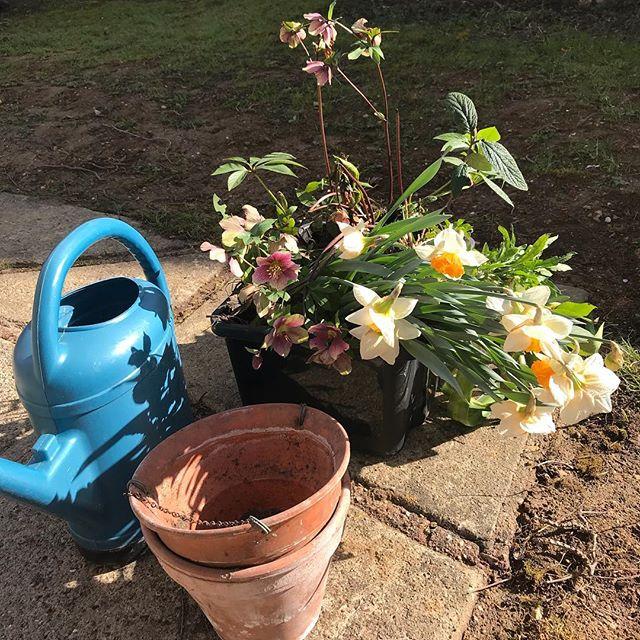 Mes parents deshabillent leur jardin pour rhabiller le mien :) #jardinage #jardinpartagé #garden