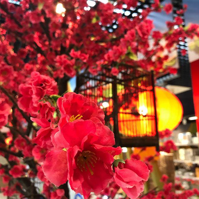 Back to China... (enfin presque... disons que je fais mes courses à Paris Store quoi ^^ ! Un des grands supermarchés asiatiques de la région parisienne).
