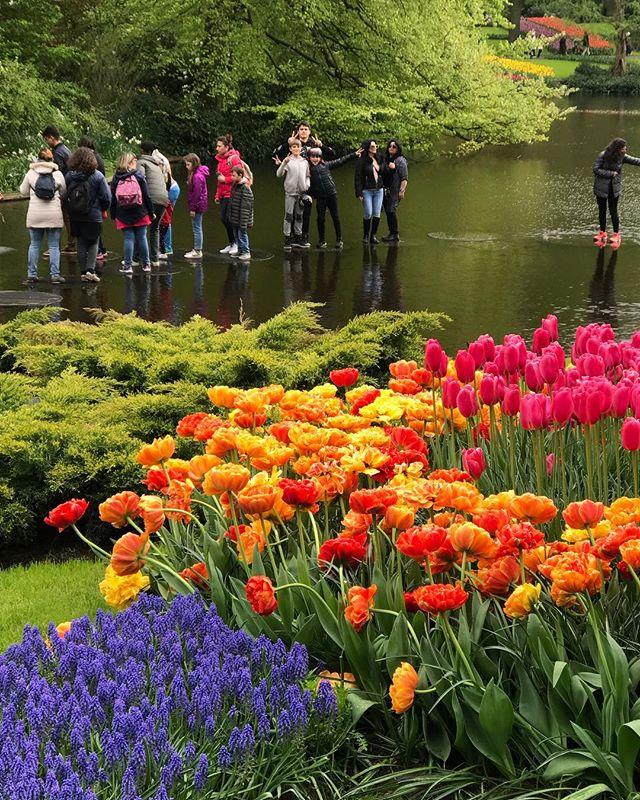 Je me demande à qui sont ces enfants qui font les cons au milieu de l'eau... #keukenhof #holland #tulipes #cilouenhollande