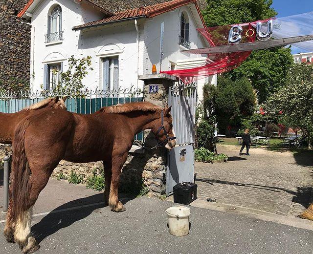 Je pensais être assez badass en organisation de fête mais je reconnais que je n'ai jamais fait venir des chevaux ! (On est super en ville, ça fait étrange de croiser des animaux de ce type dans la rue) #horses #insolite