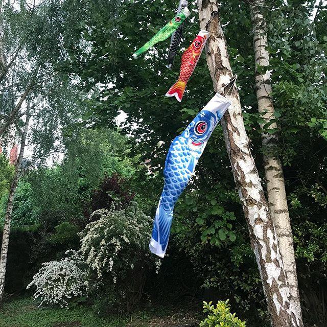 Ca souffle dans les branchies de mes koinoboris ! J'adore les voir danser au vent. Ca apporte une touche de couleur avant que je retrouve où j'ai rangé mes fanions !! #cilounewhome #koinobori #jardin #decojardin
