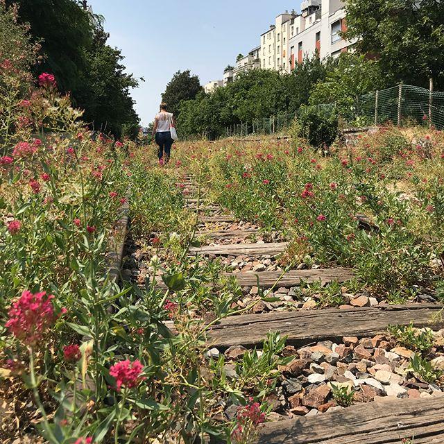 Ca faisait des années que je rêvais de fouler la Petite Ceinture, qui est une ancienne voie ferrée abandonnée de Paris. L'endroit est interdit au public, on a dû escalader pour entrer ^^ ! On est des punks avec ma cops ^^ ! Mais quelle joie de marcher sur ces rails, dans cette verdure et de profiter de la vue sur Paris !! A refaire :). #petiteceinture #parissecret #parisinsolite #parisinterdit