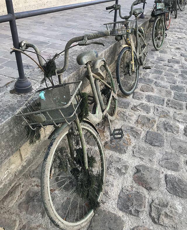Vélos repêchés de la Seine. Je ne sais pas si ce sont ceux emportés par la crue ou si c'est le rythme classique des vélos qui se retrouvent à la baille... mais bon, quel gâchi ! #paris #seine #velo