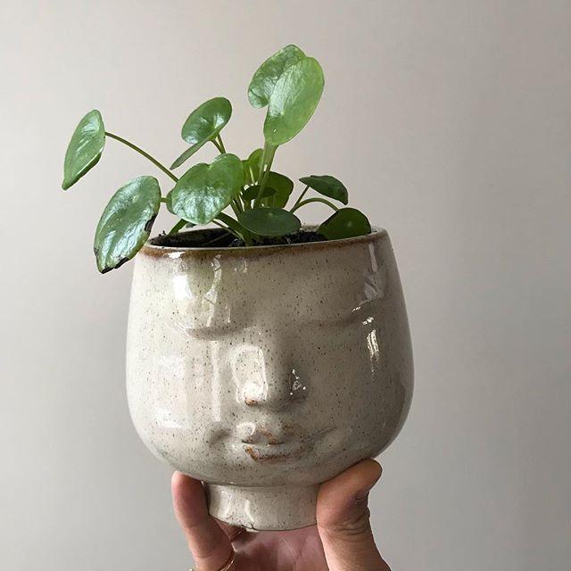 Comme je le dis dans ma storie, ce petit pot qui accueille désormais mon Pilea a eu un autre destin pour Halloween. Vous pouvez le voir en photo 3 :) #pilea #urbanjungle #jardindhiver #mesplantes
