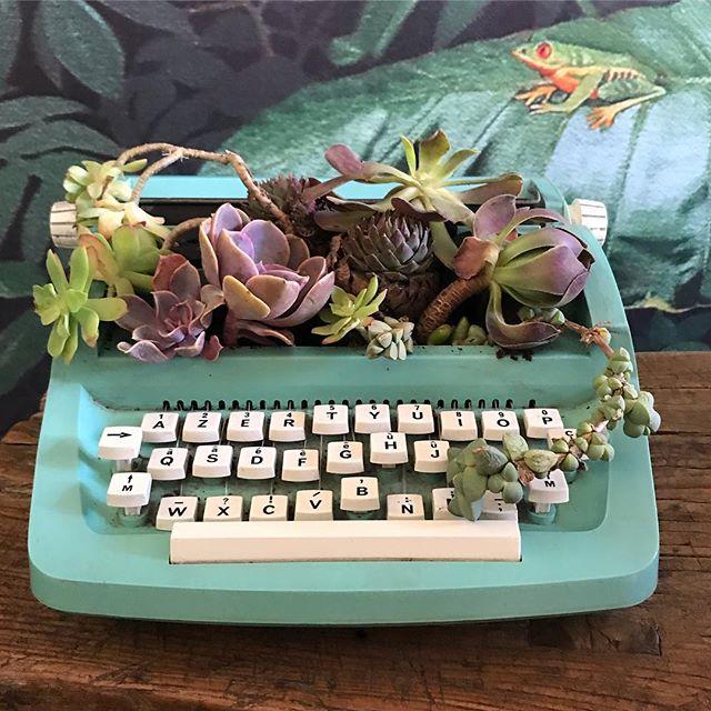 Les jolis côtés d'internet... J'ai fait un appel aux dons de succulentes il y a une dizaine de jours et j'ai reçu celles-ci, qui avaient déjà une belle histoire (racontée par Fanny dans la lettre qui accompagnait le colis). Aussitôt reçues, aussitôt plantées ! Et voilà la machine à écrire dénichée via le market de Facebook qui sert désormais de pot de fleurs ! Je suis super contente du résultat et maintenant je potasse pour être la reine de la succulente ^^ ! Des conseils ? #succulents #urbanjungle #succulent #plantegrasse #upcycling #greenery
