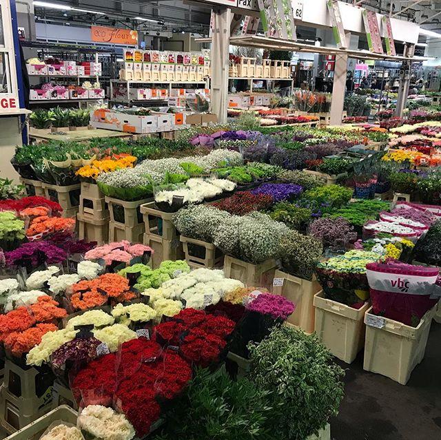 Je vous disais, Rungis est immense. Alors chaque halle a sa thématique. Les fruits/légumes, le poisson, le fromage, les fleurs, la déco, la viande... parfois un hangar suffit. Parfois il y en a plusieurs pour le même thème. Ici, des photos de la partie végétale :). Ca donne envie de fleurir toute sa maison ! #rungis #marchederungis #marcheauxfleurs
