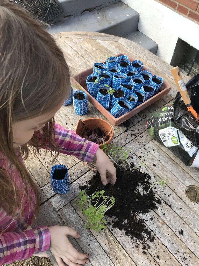 dégager les plants de tomates