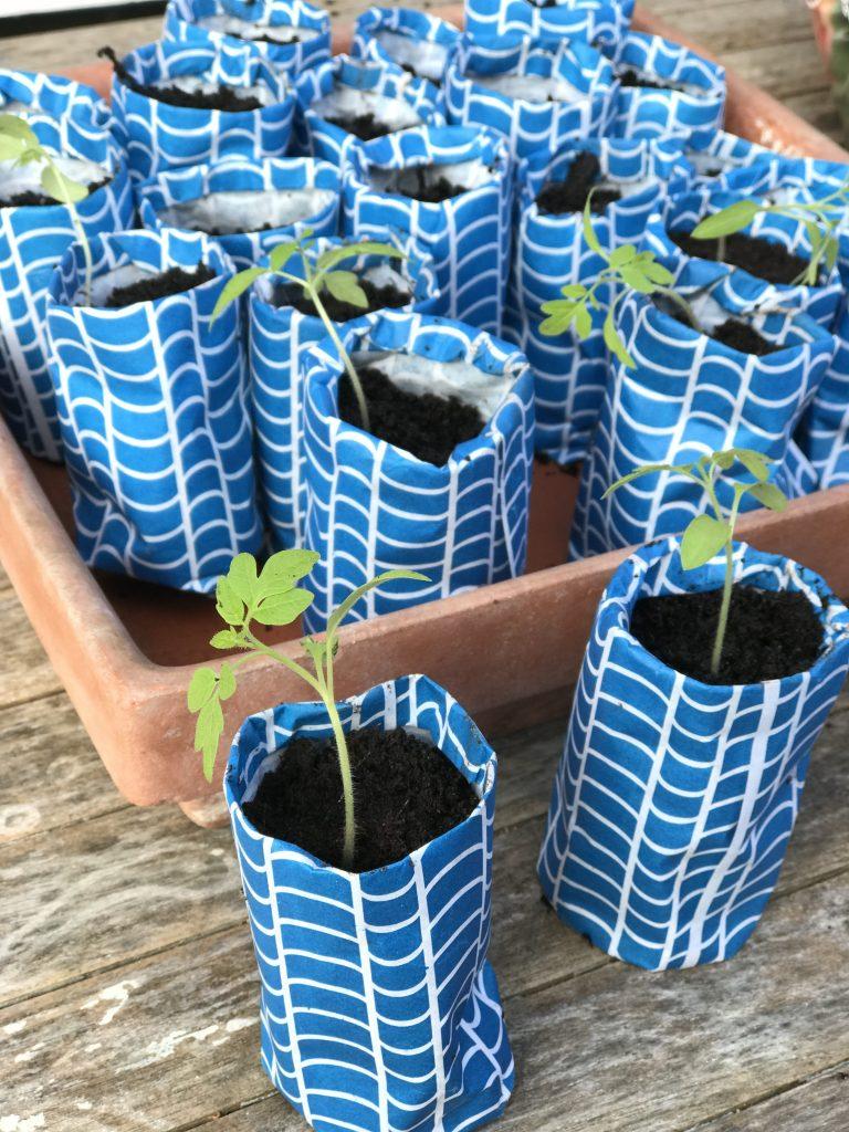 pots en papier pour plantation