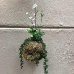 fabriquer un kokedama à partir de plantes artificielles