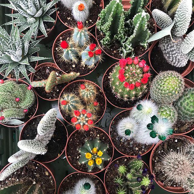 J ai pass la matin e jardinsjardin le rendez vous des amoureux du jardin urbain - Quand mettre du fumier dans son jardin ...