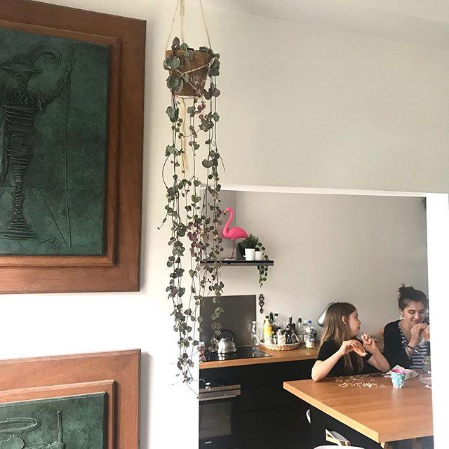 Mes belles plantes. J'adore les entendre papoter. Là Maëlle parle des publicités à Siloë, celles qu'on voit à la tv. Comme ma dernière ne la regarde pas, elle ne connait aucune pub. Sa grande soeur lui fait réviser ses classiques ^^ ! #cilounewhome