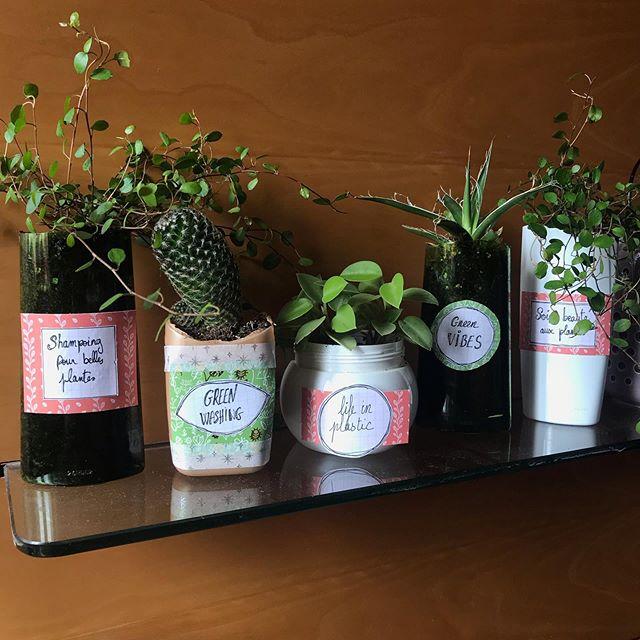 Reconnaissez-vous ces pots ? J'ai stoppé 90% de mes achats de shampoings et savons en bouteille plastique pour les remplacer par des produits solides. Mais je continue de vider mes stocks. Alors à chaque bouteille finie, au lieu de la jeter, je la décapite, je vire les étiquettes moches, je remplis ce nouveau pot avec de la terre et je lui rajoute de la verdure. La salle de bain est idéale pour les plantes qui n'ont pas besoin de trop d'eau car elles peuvent s'hydrater via les vapeurs. Et si je vois qu'elles commencent à se faner, le robinet n'est pas loin :). J'ai juste rajouté quelques étiquettes rigolotes pour la déco. Ca vous plait ? #recyclage #recyclerie #plasticfree #urbanjungle #monjardin #plantedinterieur #greenblogger