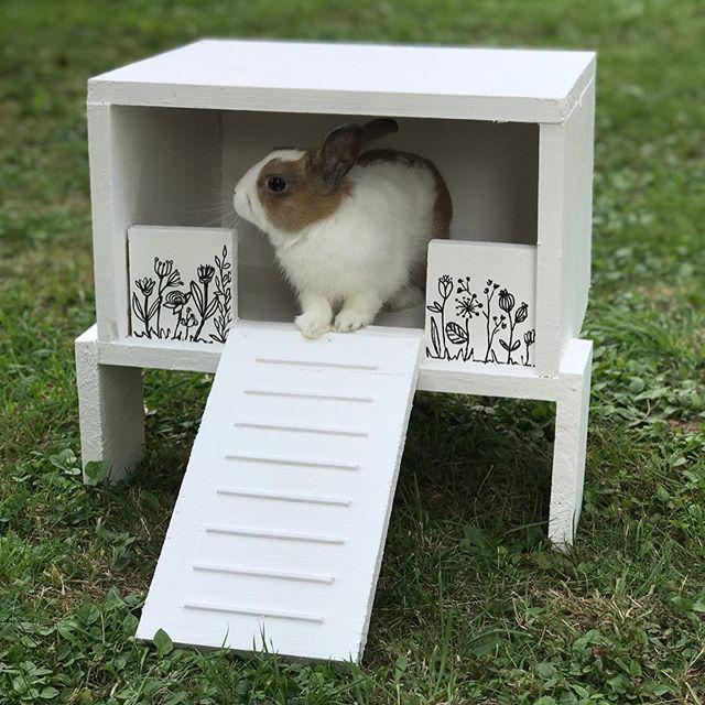 On a construit une «chambre» à Nipalou :). Du bois, des vis, de la peinture... un peu de déco. Maintenant que cette mini-maison sur pilotis est dans sa grande cage, notre lapin l'adoptée. Mais il faut se rendre à l'évidence. Ce n'est absolument pas une piaule qu'on lui a construit ! Nope, le lapin préfère dormir en-dessous. Alors qu'est-ce que c'est ? Et bien des chiottes de luxe visiblement ^^ ! Nipalou a décidé de faire ses besoins dedans. Tout ça pour ça ! ^^ (je vous épargne la photo preuve ^^) #maviecreative #ciloubidouille #lapinnain #rabbitsofinstagram #lapinstagram