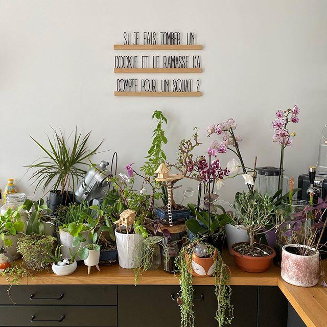 Passion plantes intérieures