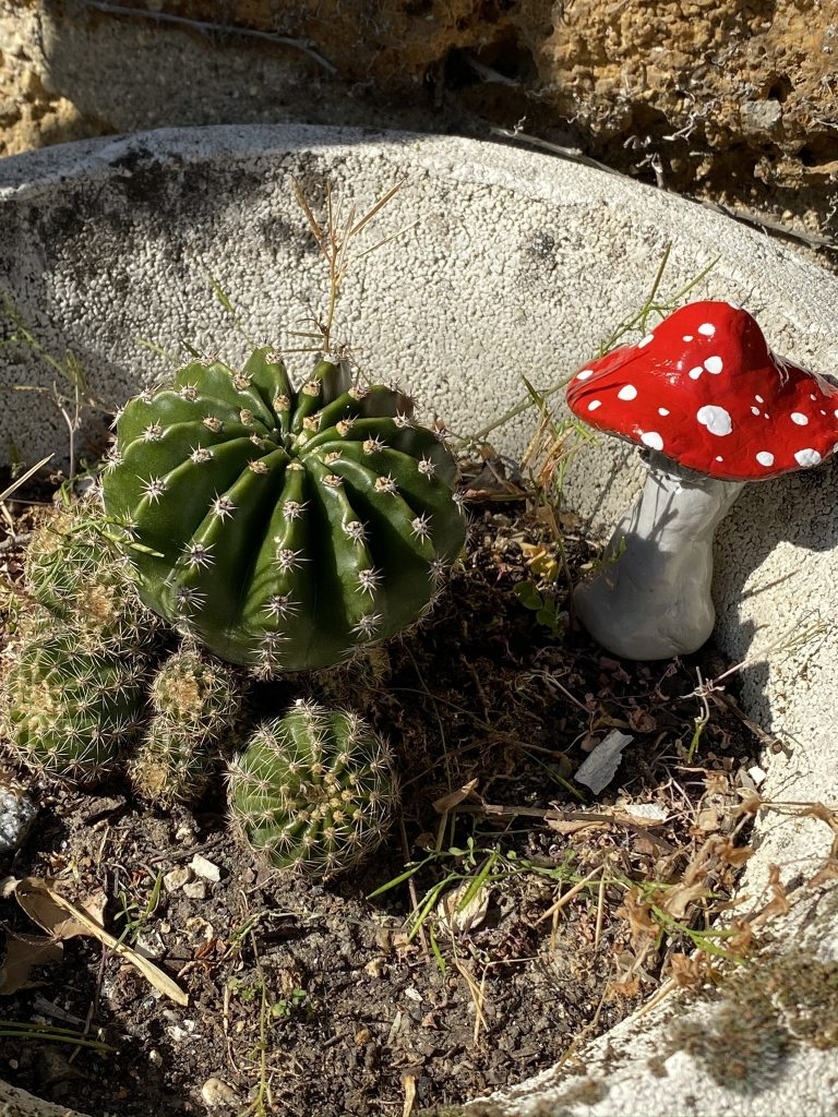 champignon argile durcissant