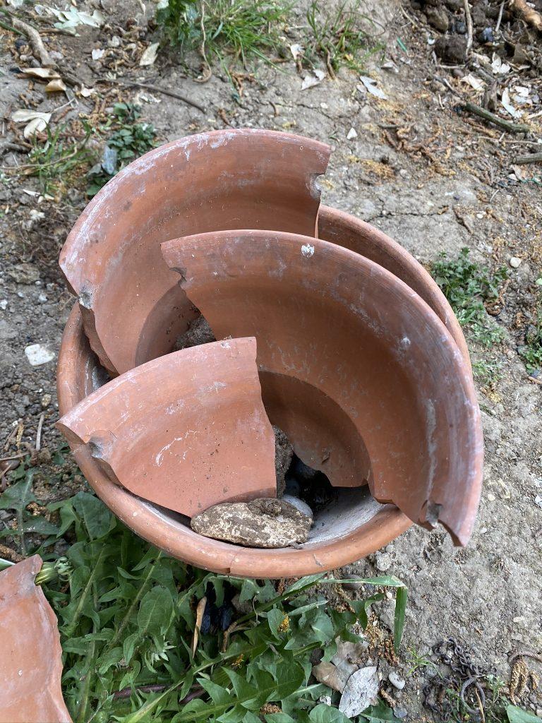 Pot cassé à succulentes