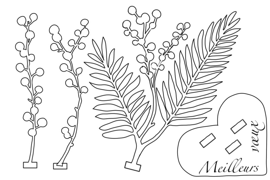 dessin de mimosa noir et blanc