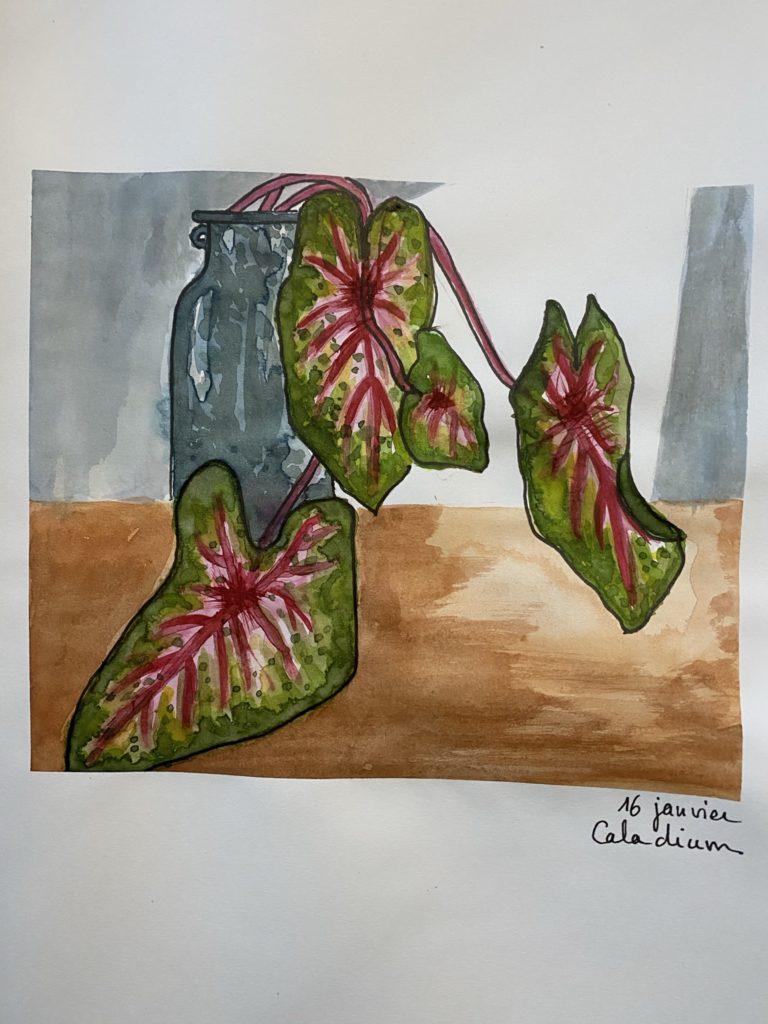 caladium aquarelle