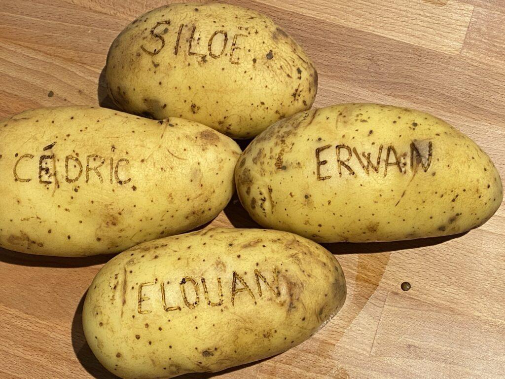 pyrograver des pommes de terre